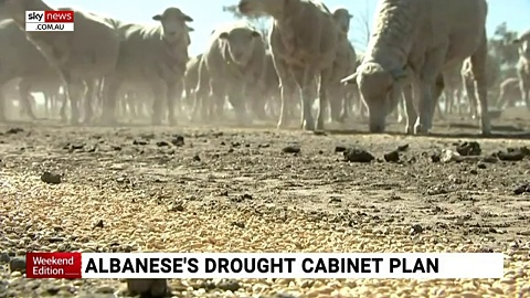 Albanese calls for drought cabinet plan | Sky News Australia
