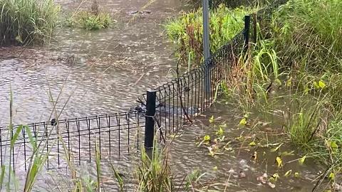 Flash flooding forces Australian Reptile Park to close | Sky News Australia
