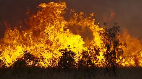 At least one home lost in Currowan blaze, NSW | Sky News Australia