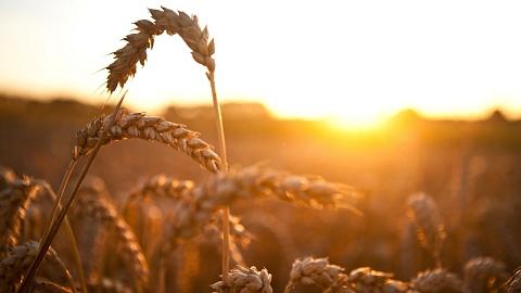 Climate Change impacting food security | Sky News Australia
