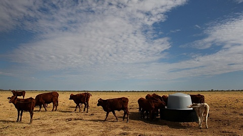 Coalition's drought policy 'lacks cohesion' | Sky News Australia