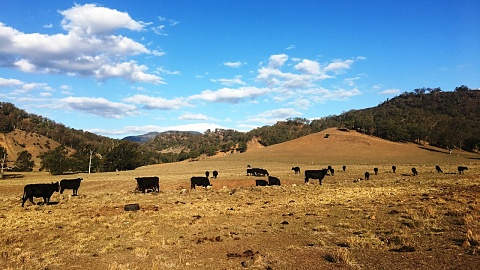 Govt urged to offer farmers money to leave the land   Sky News Australia