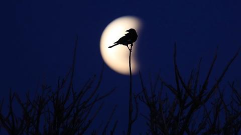 Australians treated to early-morning lunar eclipse | Sky News Australia