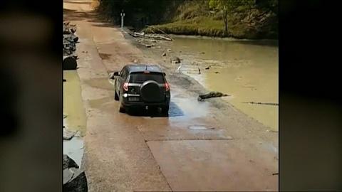 Tourist's car surrounded by crocodiles | Sky News Australia