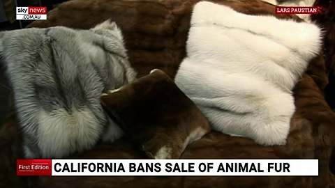 California bans manufacture and sale of animal fur | Sky News Australia