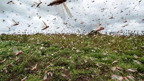 UN calls for international assistance as locust plague sweeps through east Africa | Sky News Australia