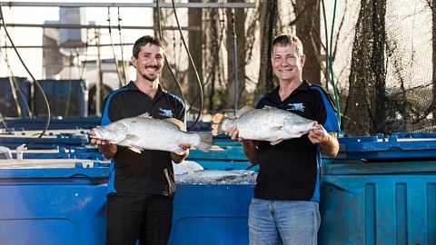 Barramundi farm first project funded by NAIF in the NT | Sky News Australia