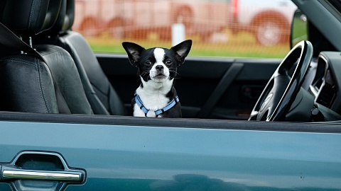 Dog owners could face jail time for leaving pets in hot cars | Sky News Australia