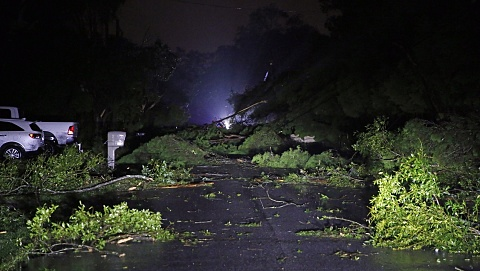 Tropical Storm Nestor makes landfall on Florida coast | Sky News Australia
