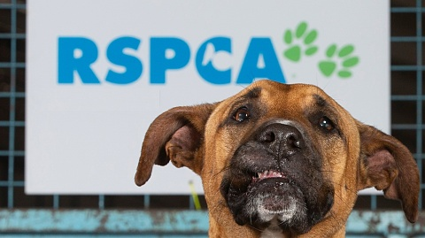 Report finds RSPCA NSW may have underpaid up to 1600 staff | Sky News Australia