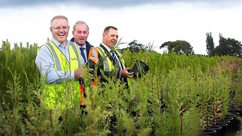 Scott Morrison launches regional forestry hubs