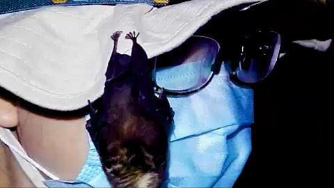 WORLD EXCLUSIVE: Footage proves bats were kept in Wuhan lab – Sky News Australia