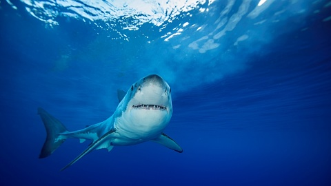 Shark attacks still sporadic within Australia: Marine biologist | Sky News Australia