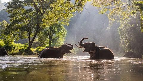 Ban imposed on sending wild elephants to zoos | Sky News Australia