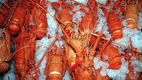 Hospitality industry embraces WA govt's rock lobster proposal
