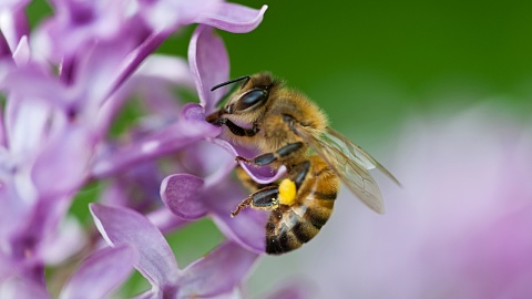 Researchers mount campaign to rescue dwindling bee populations