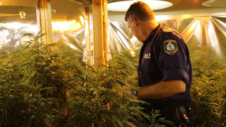 NSW Police seize $2 8m of Cannabis plants in Hunter Valley